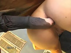 Horse dick in young ass